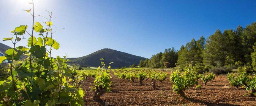 bullas cinco rutas de vino diferentes en españa clickviaja