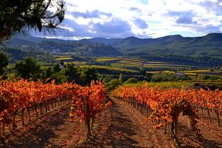 penedes cinco rutas de vino diferentes en españa clickviaja