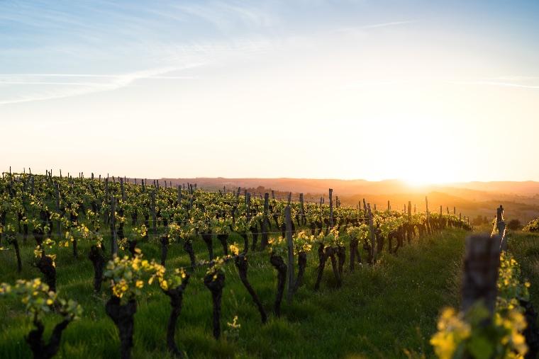 viñedo cinco rutas de vino diferentes en España clickviaja